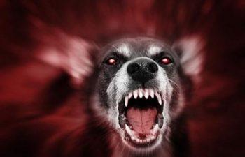 North Charleston SC Animal Injury Lawsuits