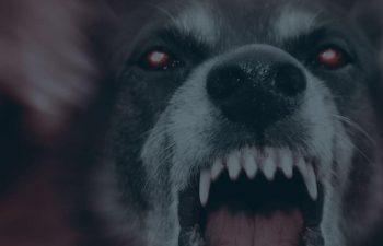 South Carolina Dog Bite Injury Laws North Charleston, SC