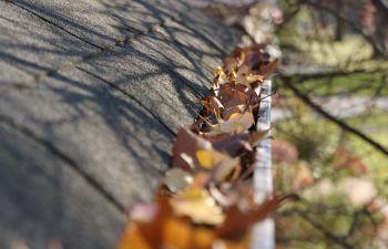Leaves Inside of a Gutter Charleston SC